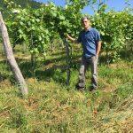 Local Vermont Wine Grower